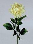 Chrysantheme 78cm Höhe gelblich