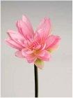 Lotos 70cm Höhe rosa