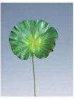 Lotos Blatt 71cm Höhe 20cm Durchmesser grün