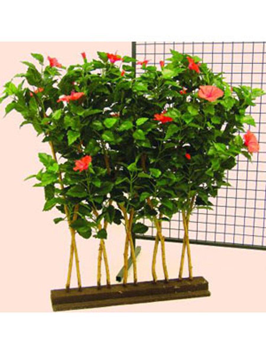 calathea busch 180 bl tter 60cm ebay. Black Bedroom Furniture Sets. Home Design Ideas